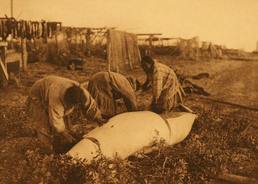 American Indians : Cutting up a Beluga - Kotzebue.