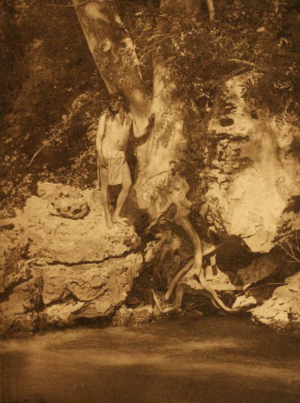 American Indians : By the Sycamore - Apache.
