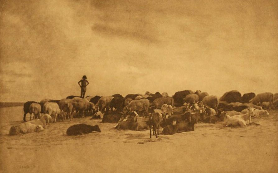 A Photograph of a Hopi Flock.