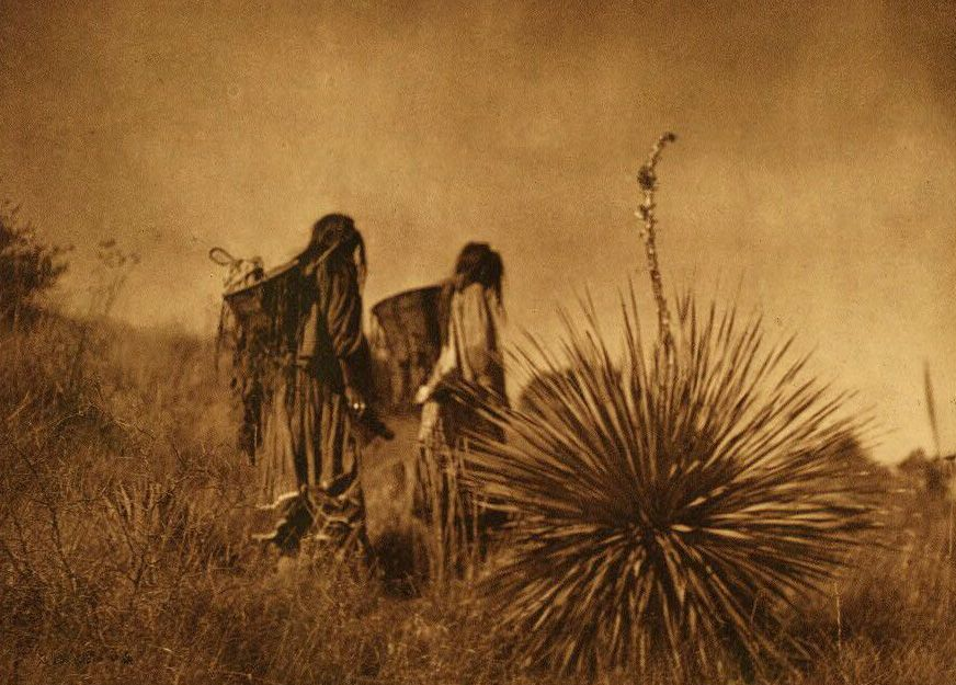 A Photograph of A Mescal Harvest [Apache].