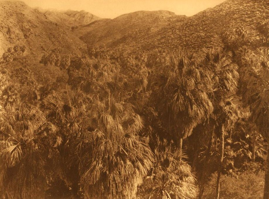 A Photograph of a Palm Canon.