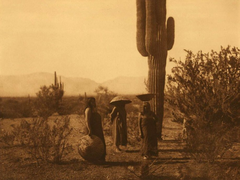 A Photograph of Saguaro Fruit Gatherers [Maricopa].