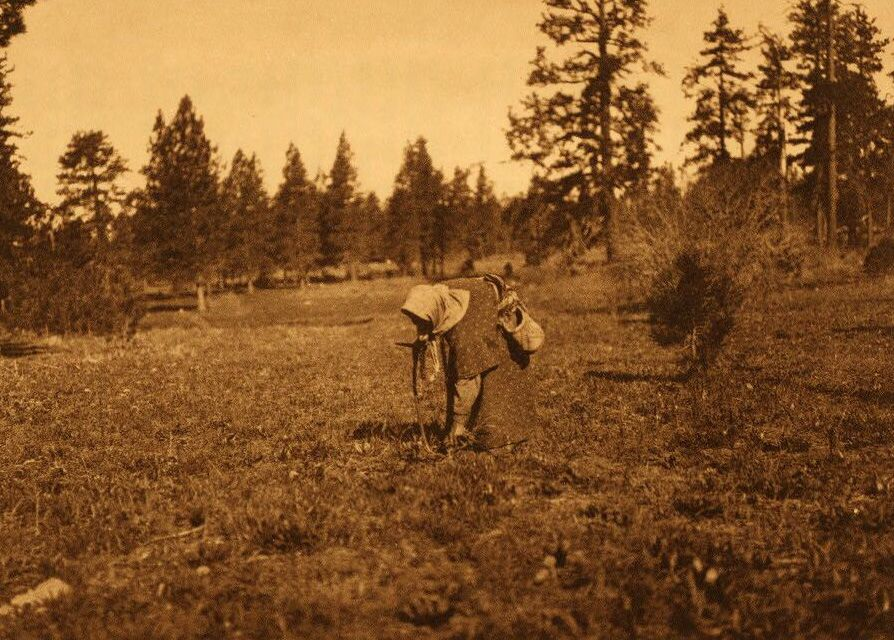 A Photograph of The Root Digger [Yakima].