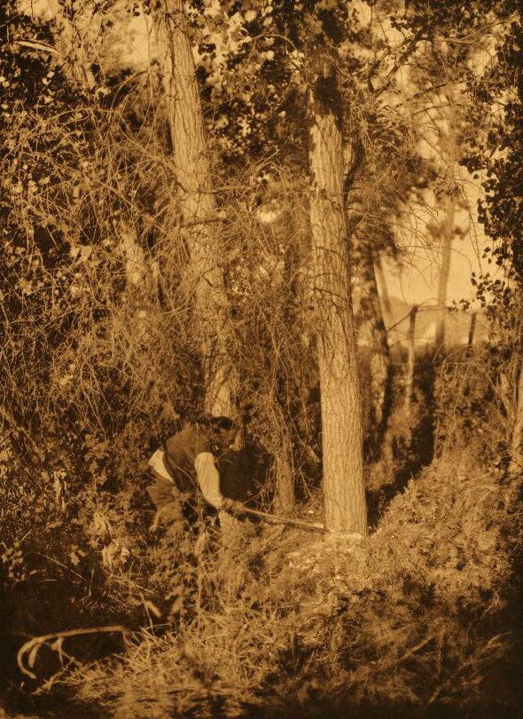 A Photograph of a Cheyenne Cutting The Centre Pole.