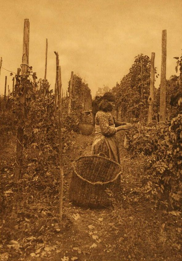 A Photograph of Hop Pickers [Puget Sound].