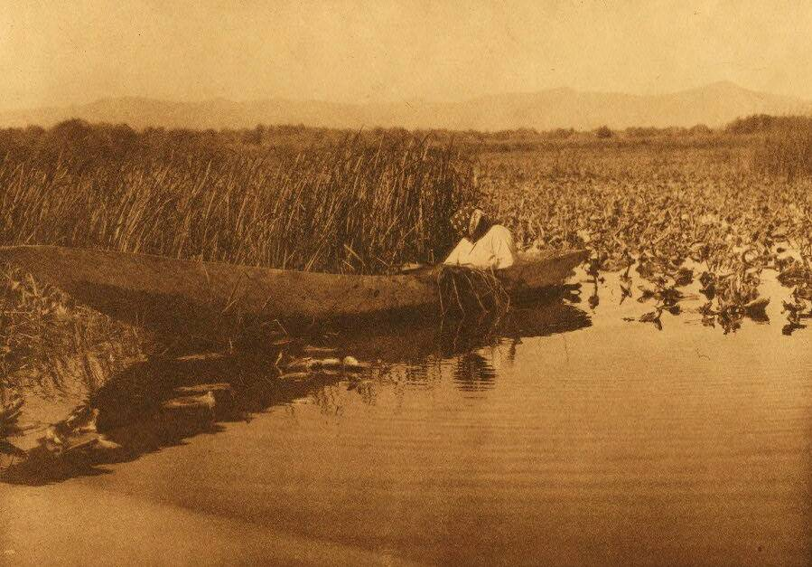 American Indian canoe photograph : Gathering Basket Material.