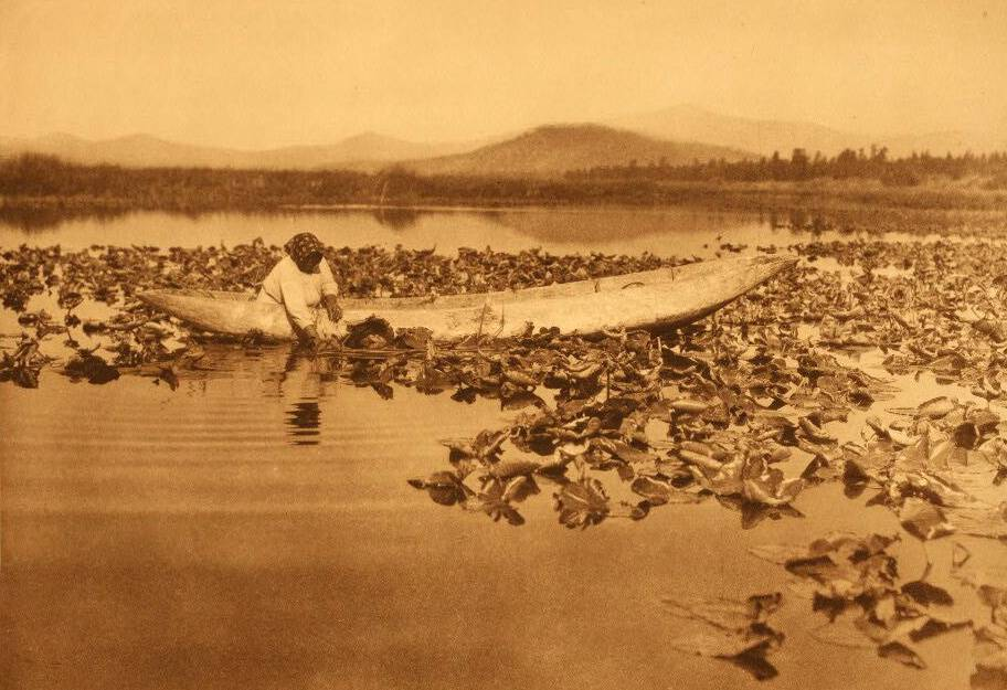 American Indian canoe photograph : A Klamath Indian Gathering Wokas.