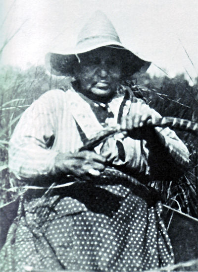 An old photograph of a Chippewa Woman Harvesting Wild Rice - Minnesota 1925.