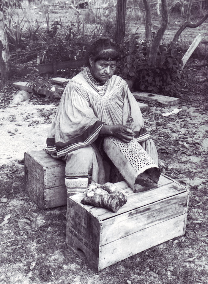 An old photograph of a Seminole Woman Grates Kunti Roots.
