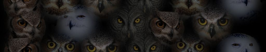 Owl Background #8. owl-background-08.jpg