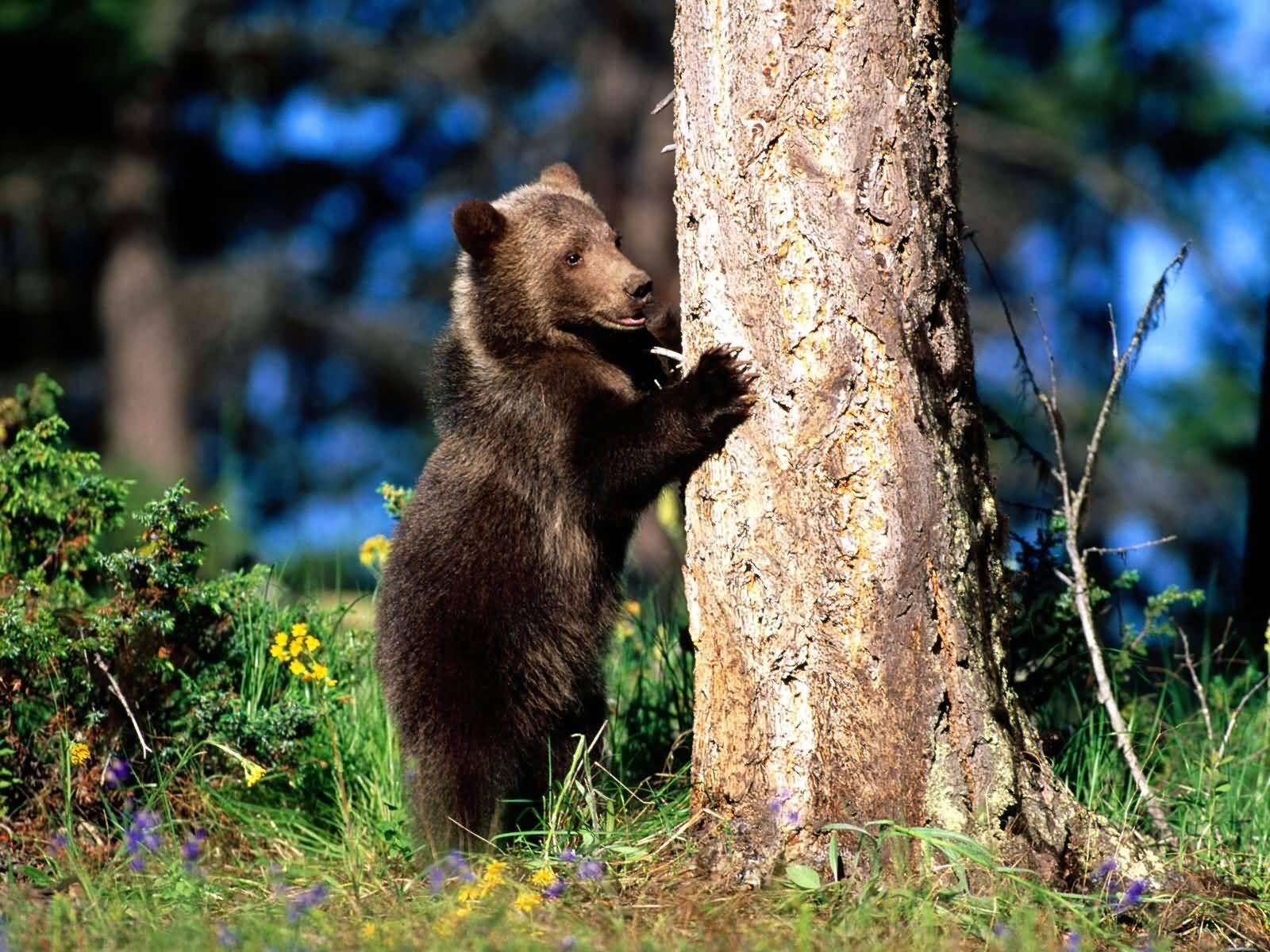 """Obrázok """"http://www.firstpeople.us/pictures/bear/1600x1200/Bear_Hug_Grizzly_Bear_Cub-1600x1200A.jpg"""" sa nedá zobraziť, pretože obsahuje chyby."""