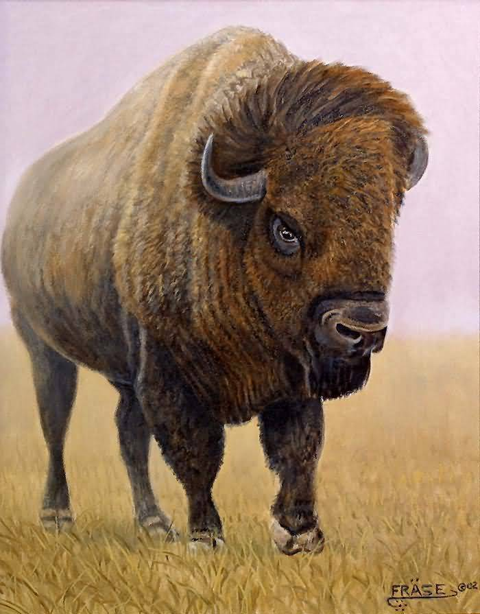 Michael P. Frase : Painting of Bison.