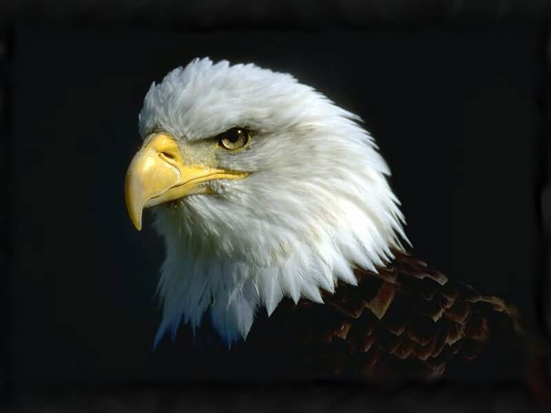 An American Eagle Head.