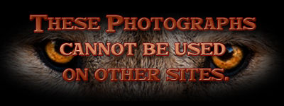 Cannot be used on other sites.