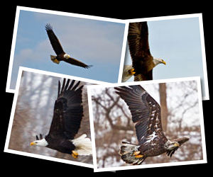 Eagle Photographs.