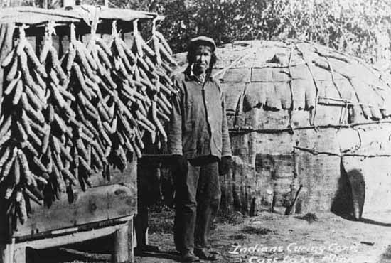 A Chippewa Indian Curing Corn, Cass Lake.